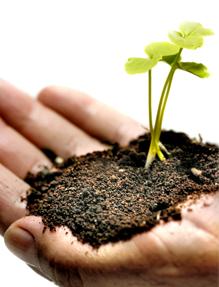 planta_creciendo_en_mano_2